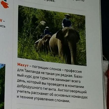 Курс управления слоном