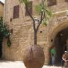 Летающее дерево в старом Яффо, Тель-Авив