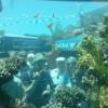 Аквариум в подводной обсерватории, Эйлат