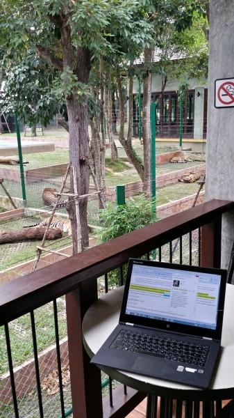 Моё рабочее место - в кафе в Tiger Kingdom