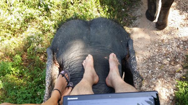 Моё рабочее место - на спине индийского слона на сафари в Као Лак
