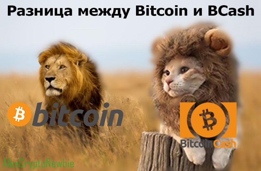 Разница между Bitcoin и Bitcoin Cash