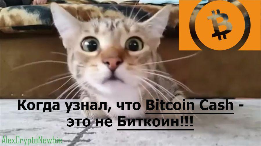Биткоин это не Bitcoin Cash