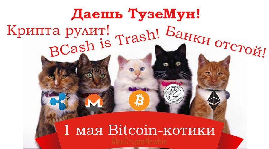 С 1 мая от криптокотиков