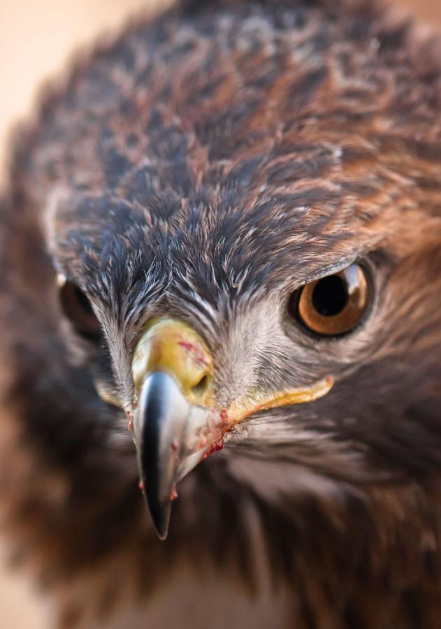 falcon1a.jpg