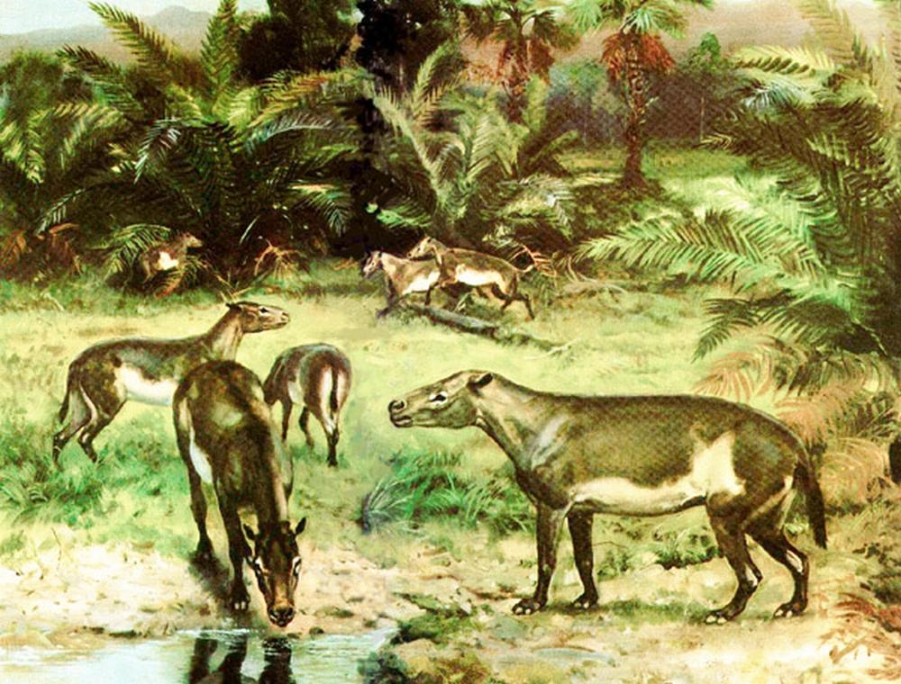 кайнозойская эра животные и растения фото изготавливаем основание верхнюю