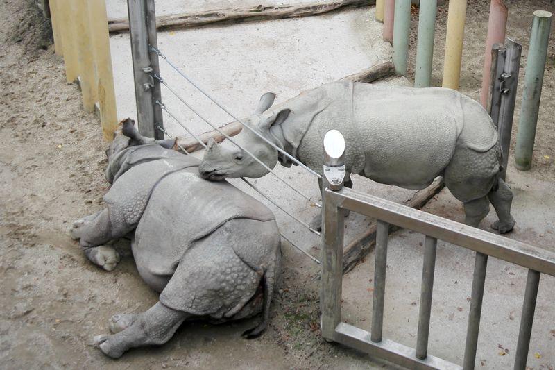130923_10shoenbrunn_rhinos