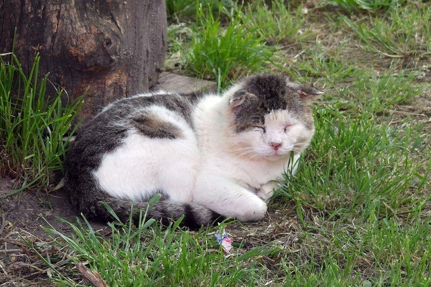 Боевой кот с Бурано