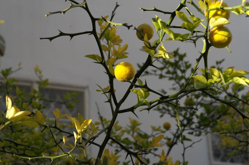 131003_mandarines