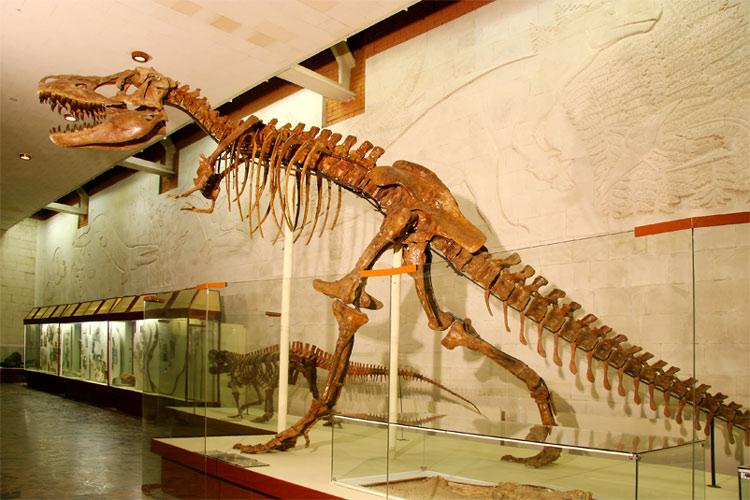 6.Скелет тарбозавр в Палеонтологическом Музее РАН, привезенный экспедицией Ефремова.  https://www.paleo.ru/museum/exposure/exhibit.php?ID=11753