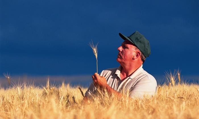 Употребление ГМО приводит к вымиранию!