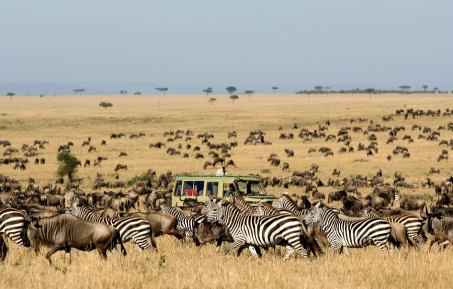 Great-Migration-Serengeti-17-Oct-2010-Asilia