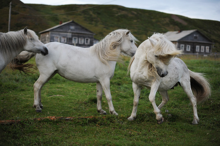horse_rus_sev