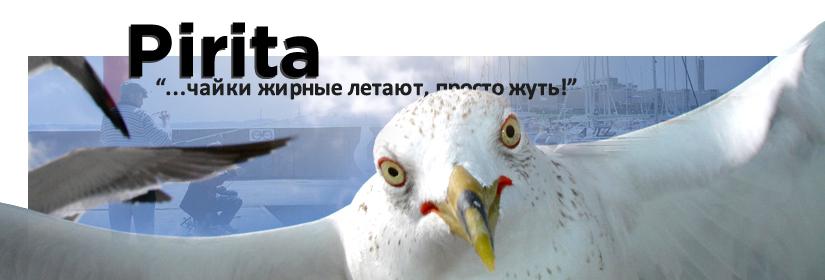 В Пирите | Чайки жирные летают, просто жуть!
