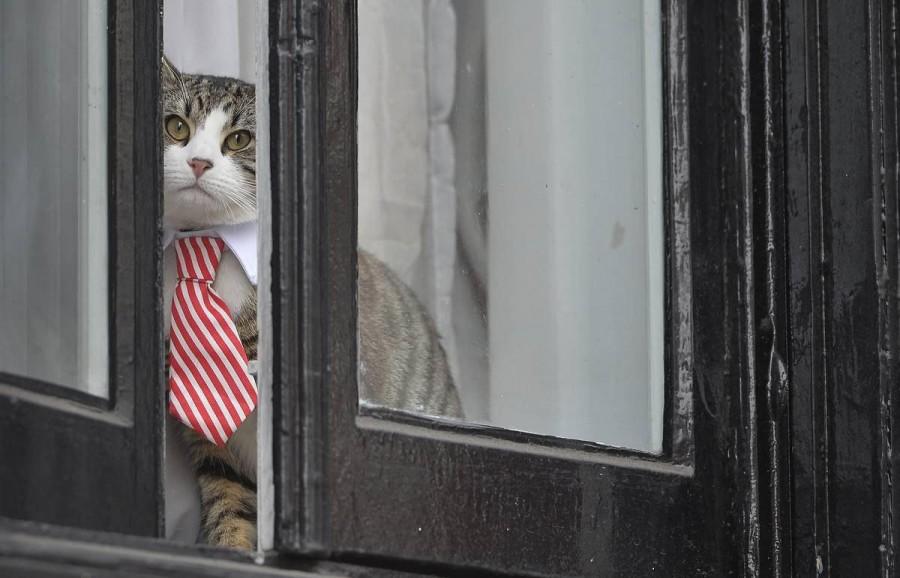 кот ассанжа