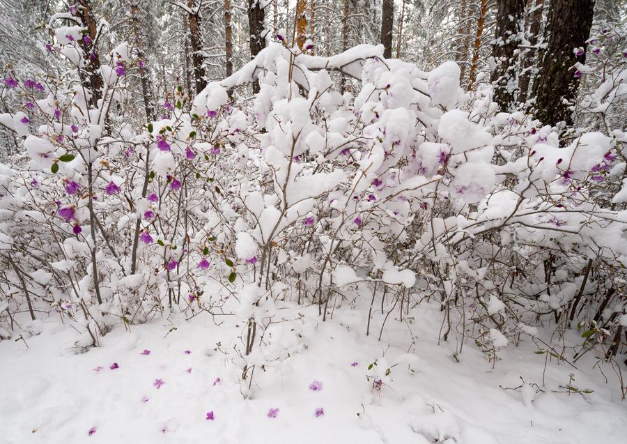 © Alexey Bezrukov Байкальский заповедник _DSC8358