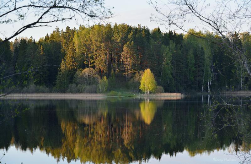 Закат на лесном озере в Псковской области. Здесь, на соседнем полуострове мы простояли лагерем несколько дней. Это становится хорошей майской традицией)