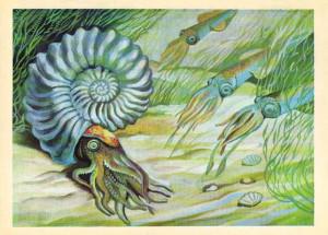paleo-pic-ammonit-parkp-4-da