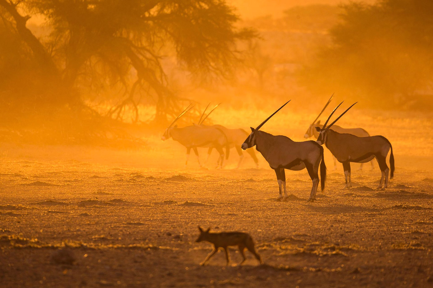 Unique Africa! The play of light and shadows Keith Connelly.