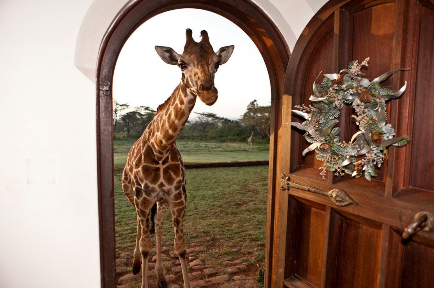Giraffe Manor_7.jpg