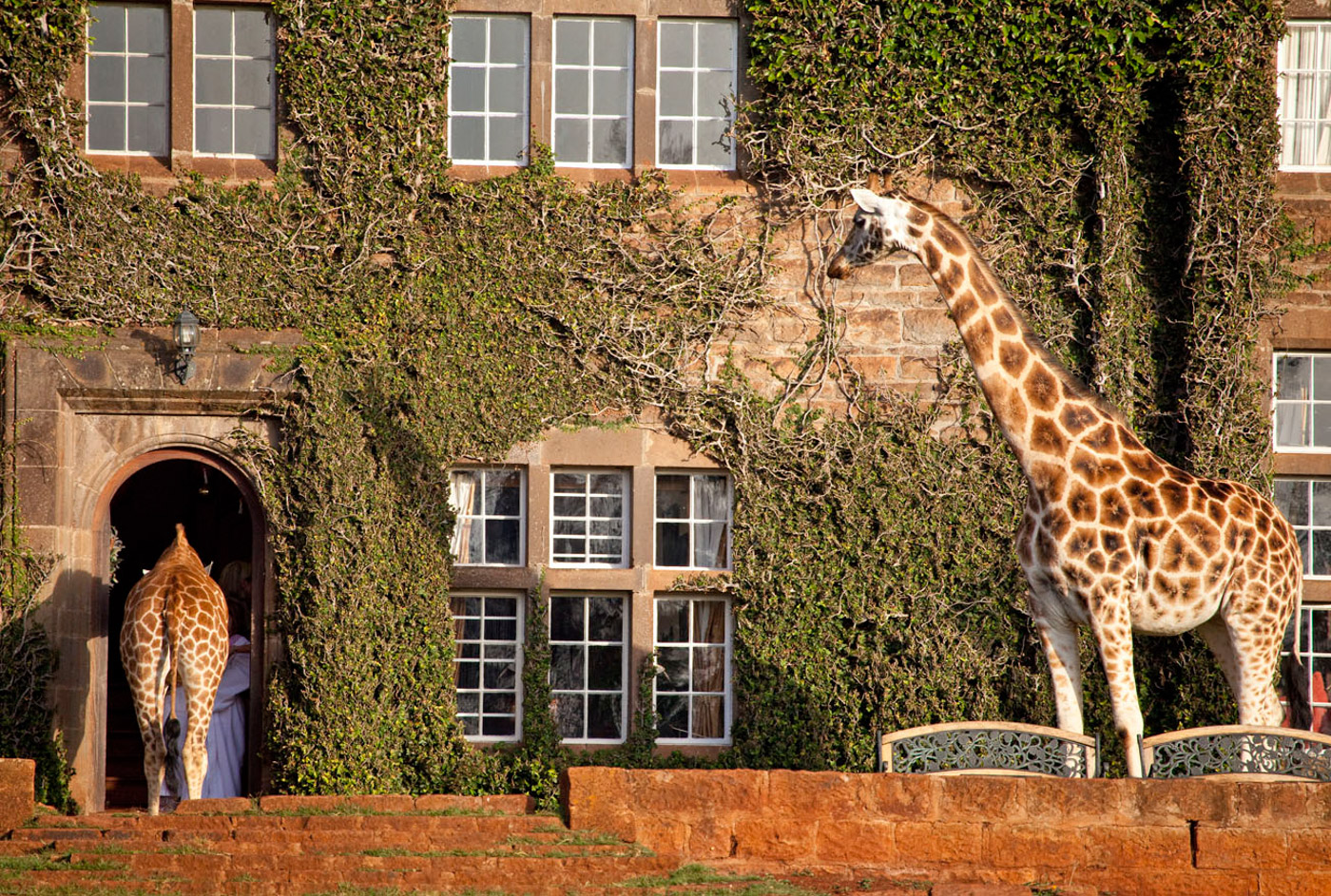 Giraffe Manor_8.jpg