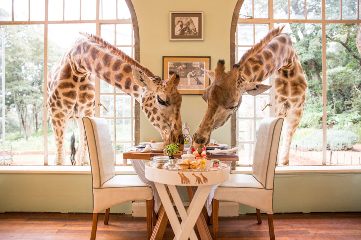 Giraffe Manor_9.jpg