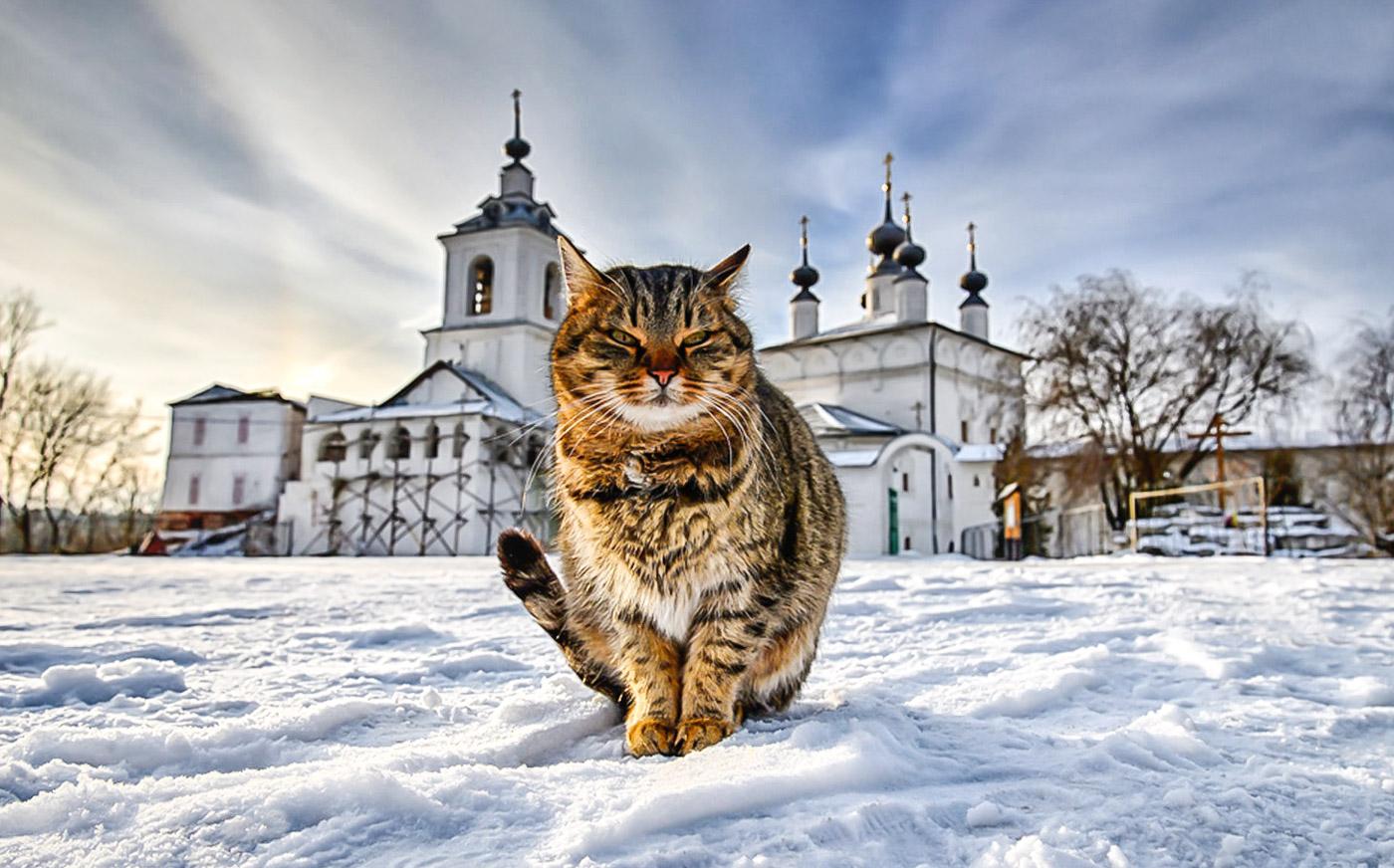 cat_in_church_1.jpg