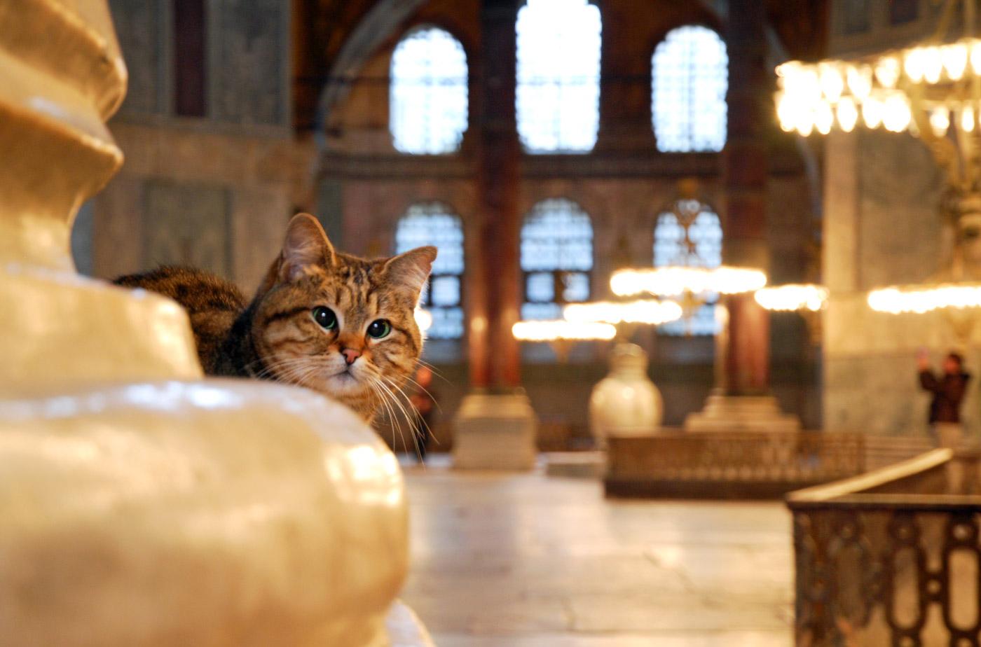 cat_in_church_2.jpg