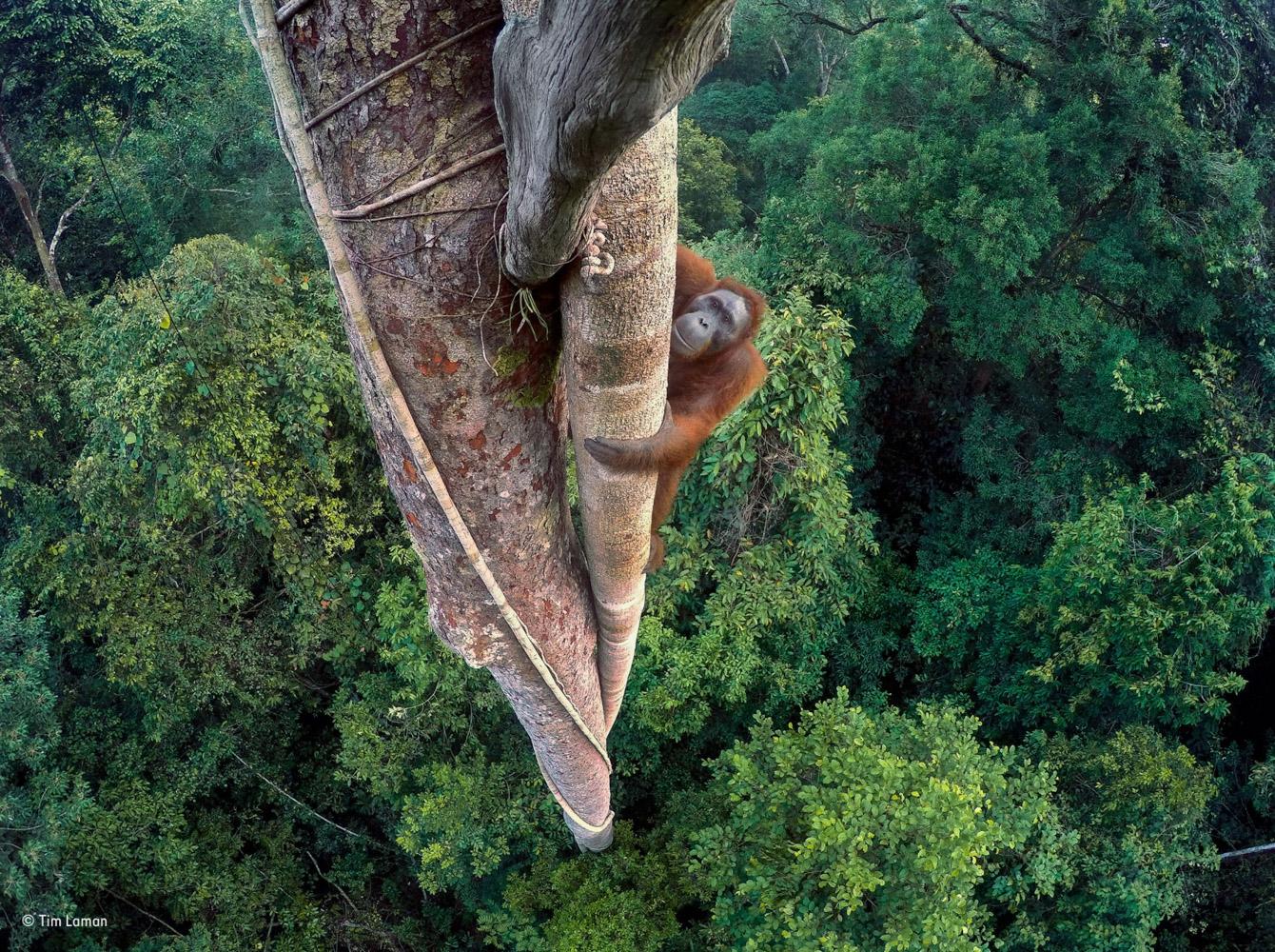 Лучшие фотографии дикой природы 2016 года