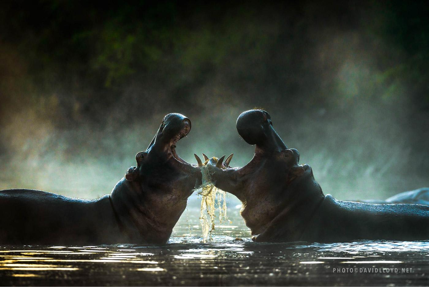 Неповторимая природа Африки глазами Дэвида Ллойда...