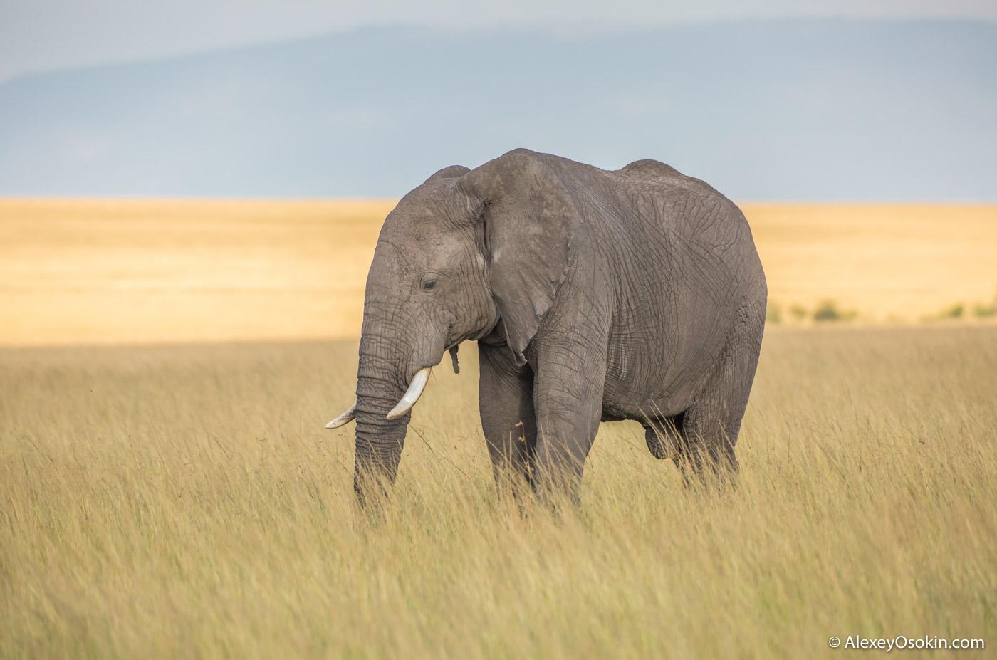 elephant_size_lj_-2.jpg