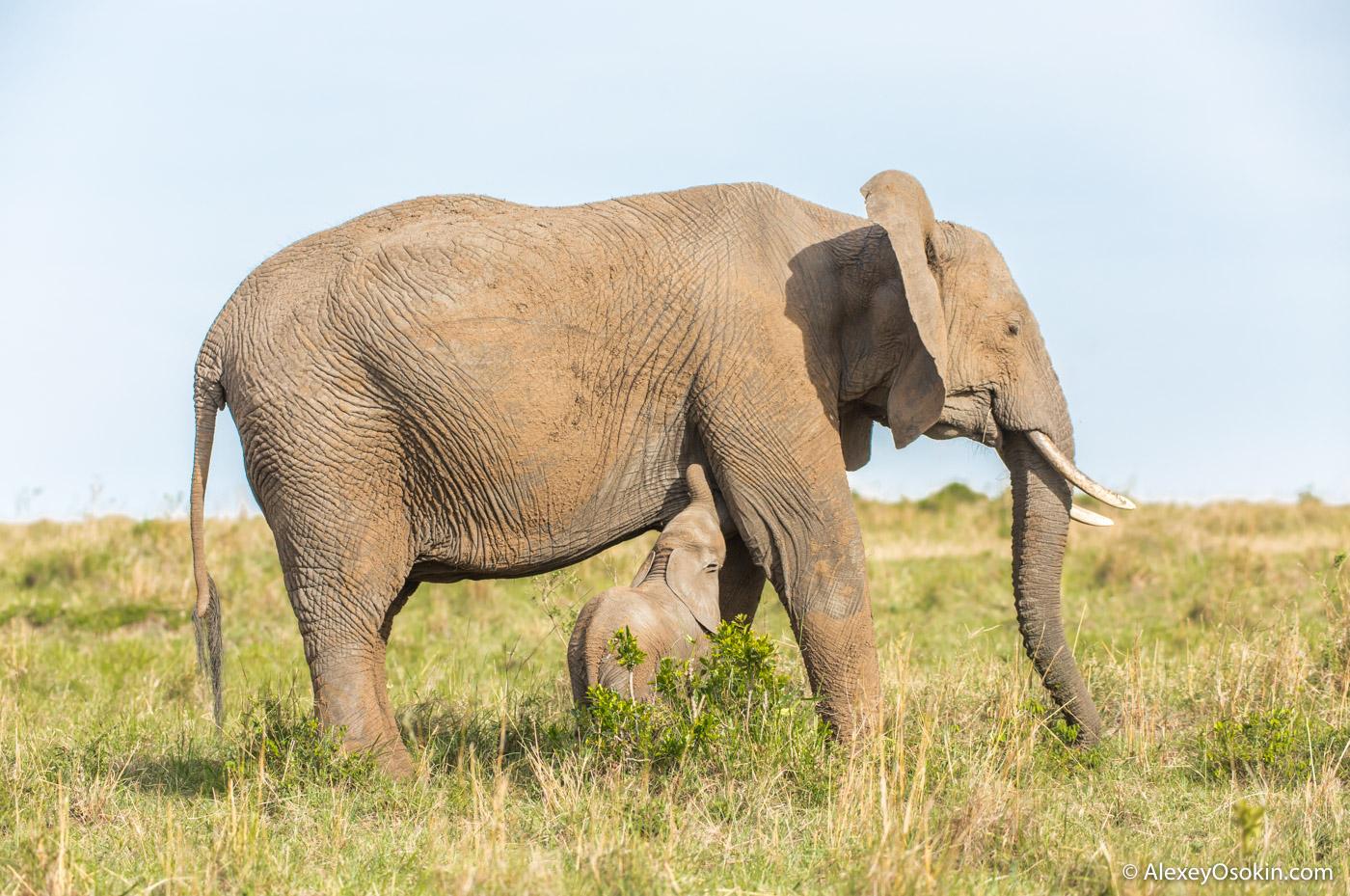 elephant_size_lj_.jpg