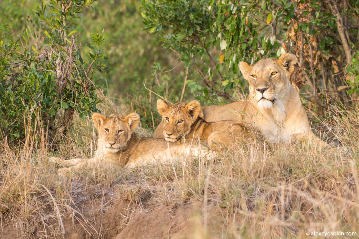 Женщины России и самки диких животных Африки, что общего?