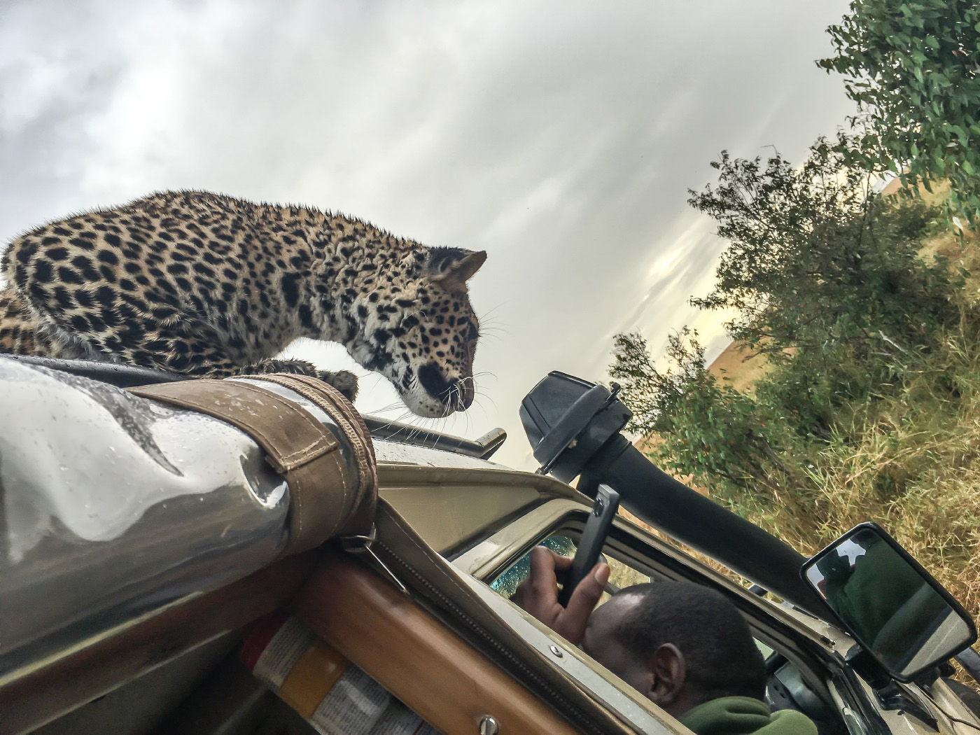 На меня набросился леопард