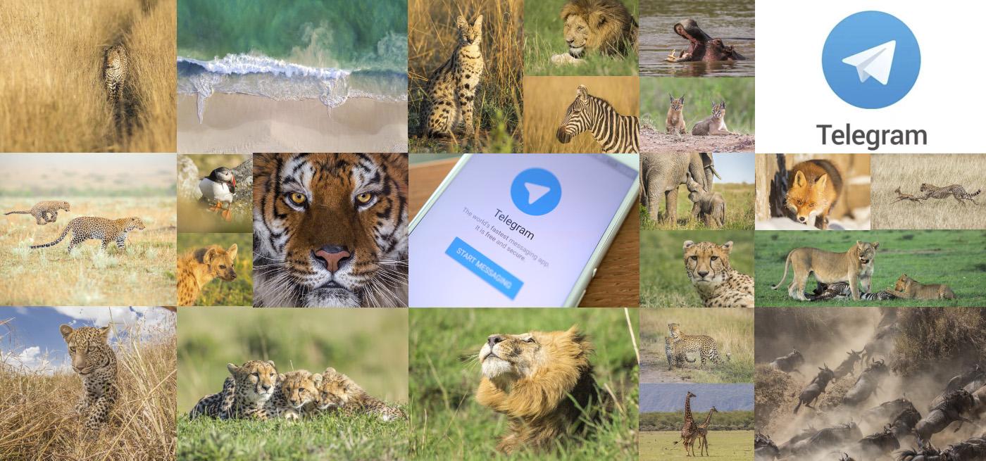 В мире животных теперь и в Telegram