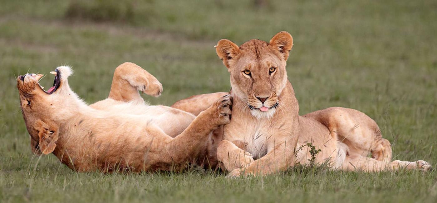 Смешные фотошедевры из мира дикой природы...
