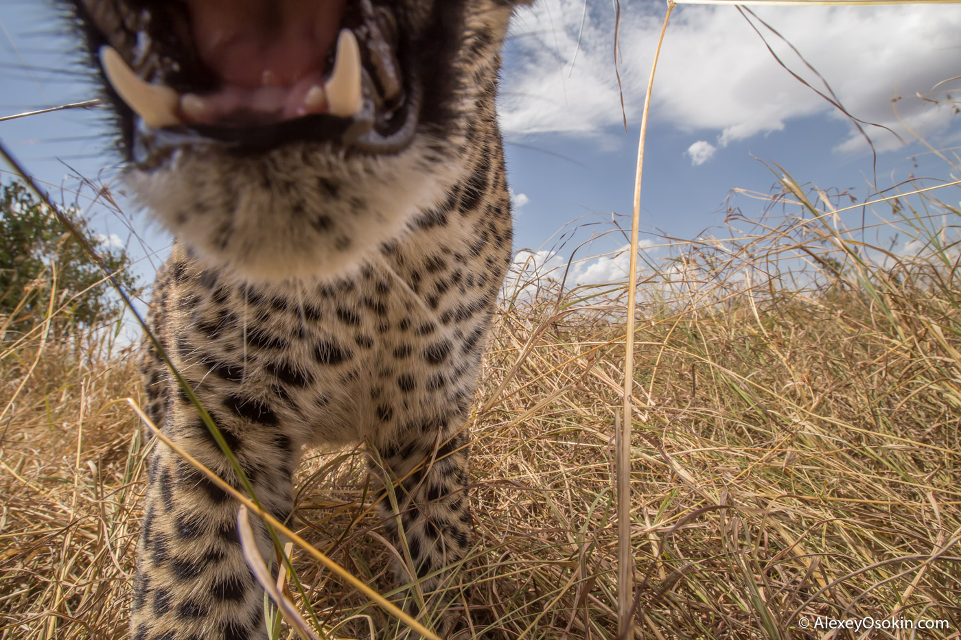 The Adventures of a Naturalist Photographer