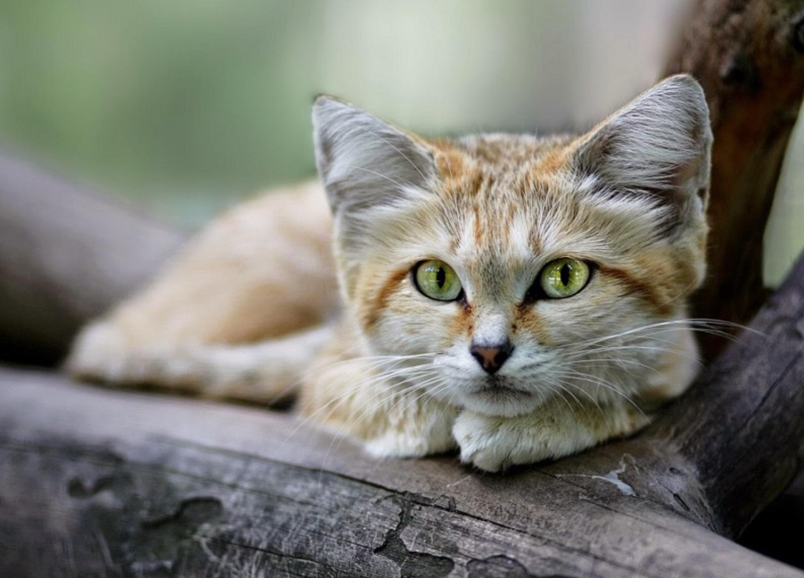 Как вы ошибаетесь насчёт кошачьих глаз