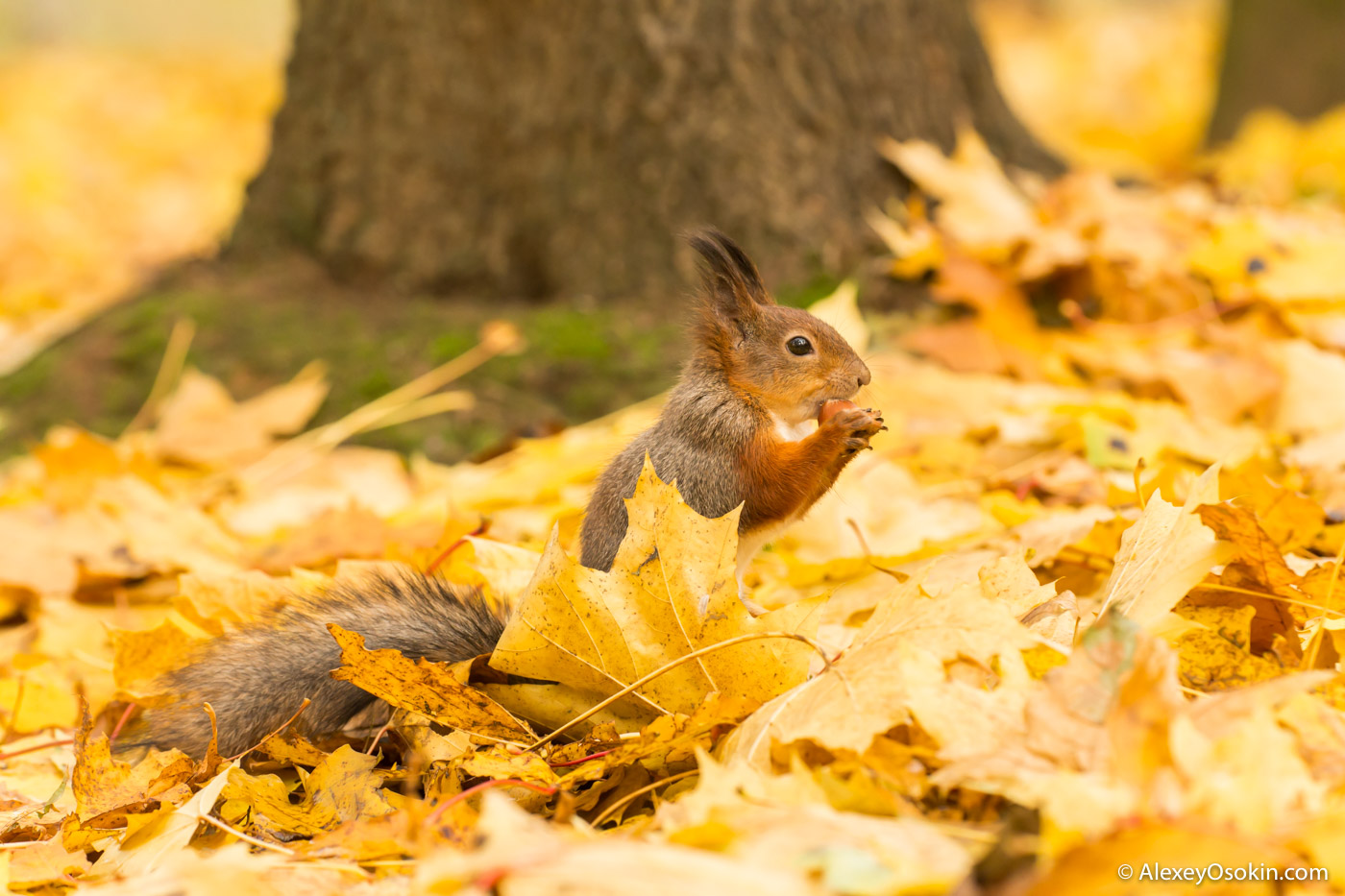 squirrel, oct.2017-ao-10.jpg