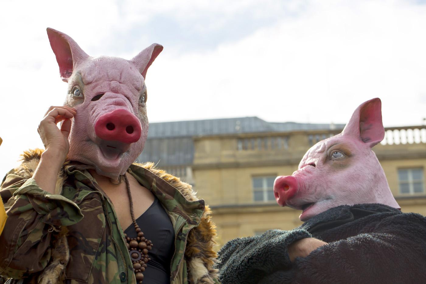 Похотливая сучка, баран, свинья и крыса. Что общего?