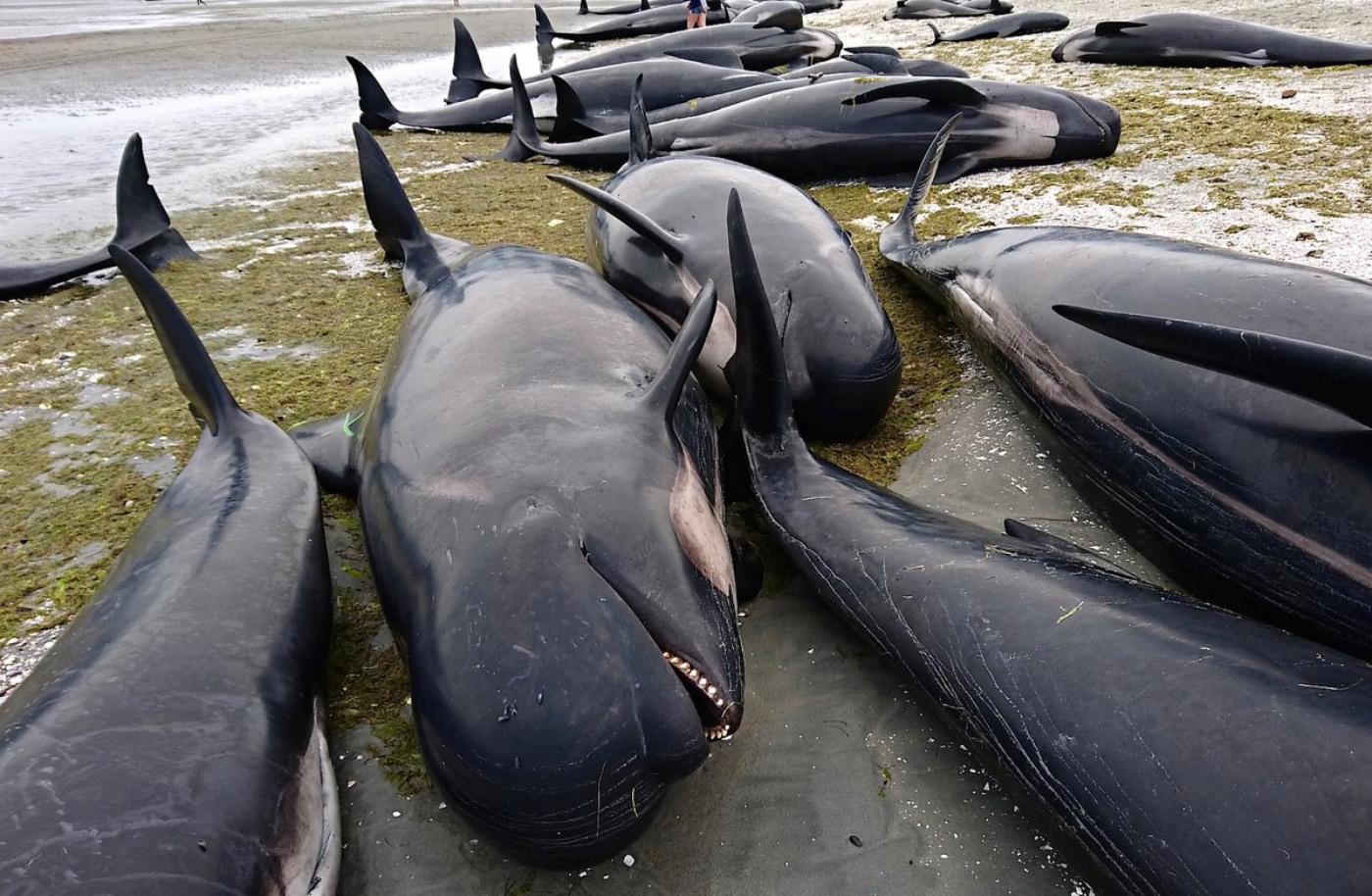 dolphin suicide.jpg