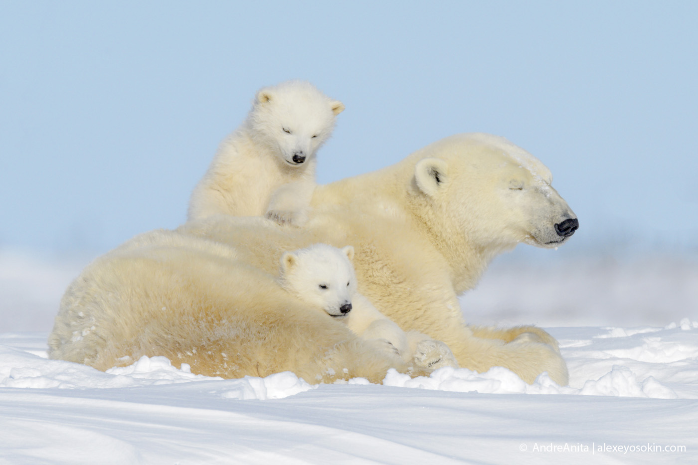 polar_bear_2.jpg