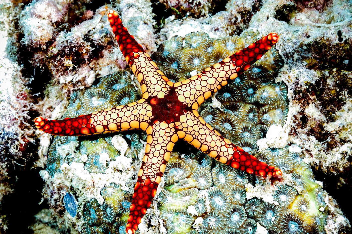starfish-2.jpg