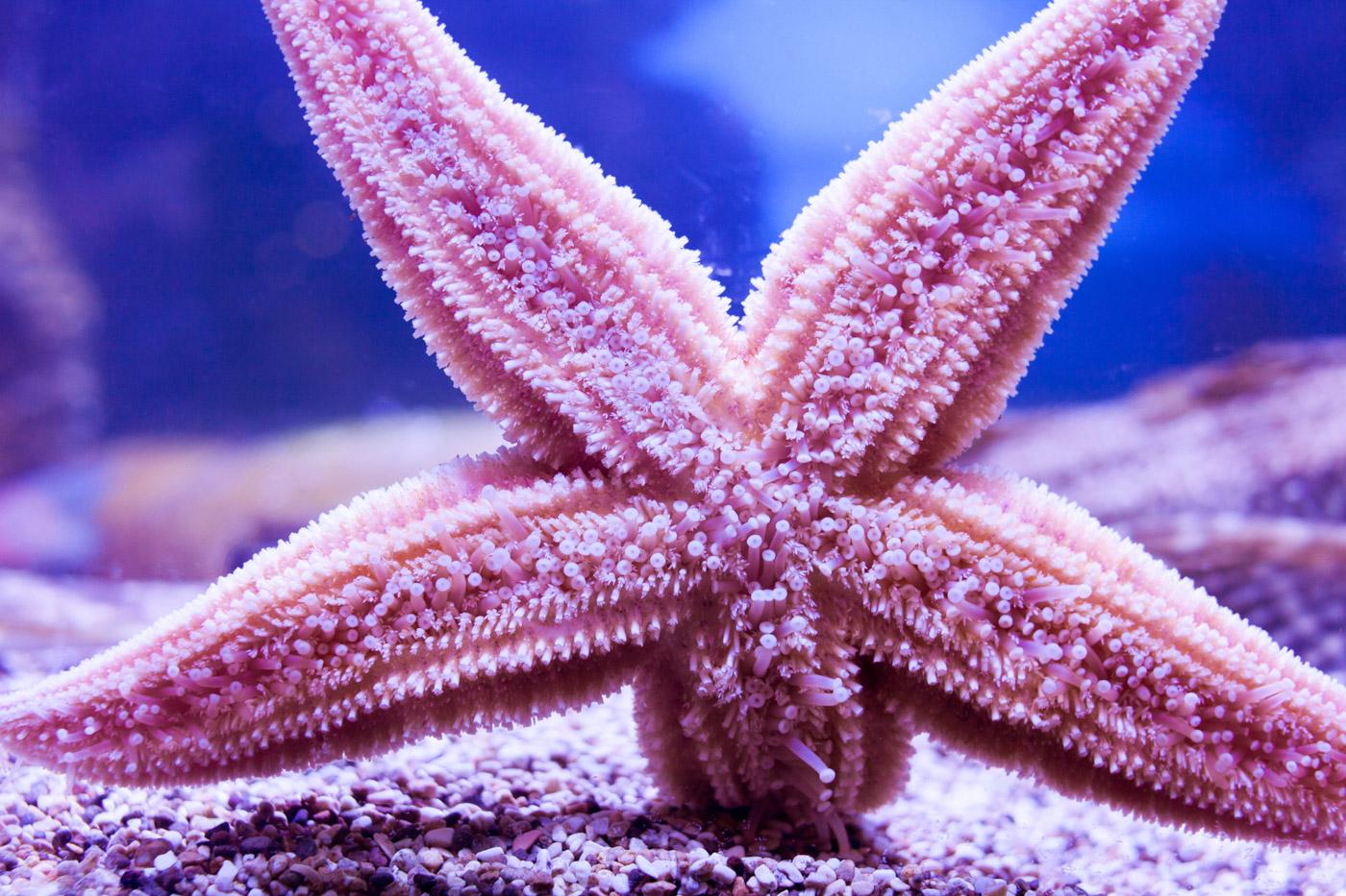 starfish-4.jpg