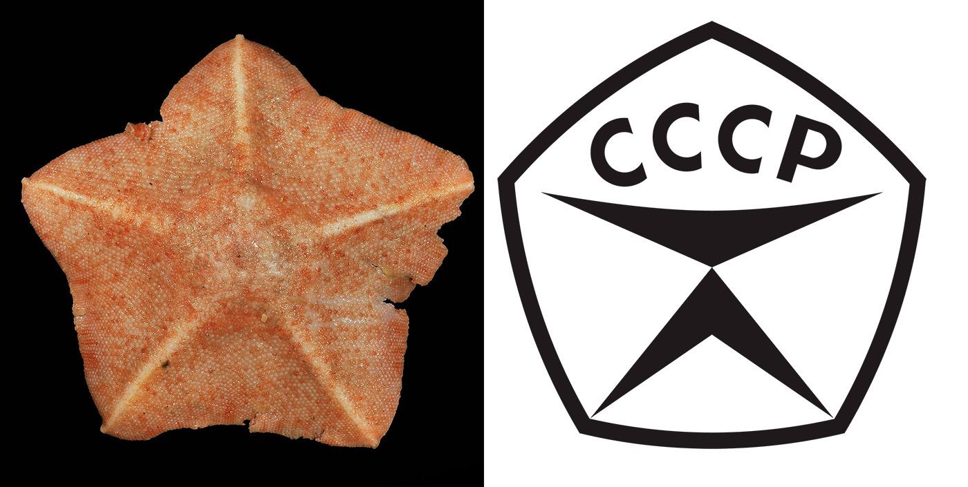 starfish_cccp.jpg