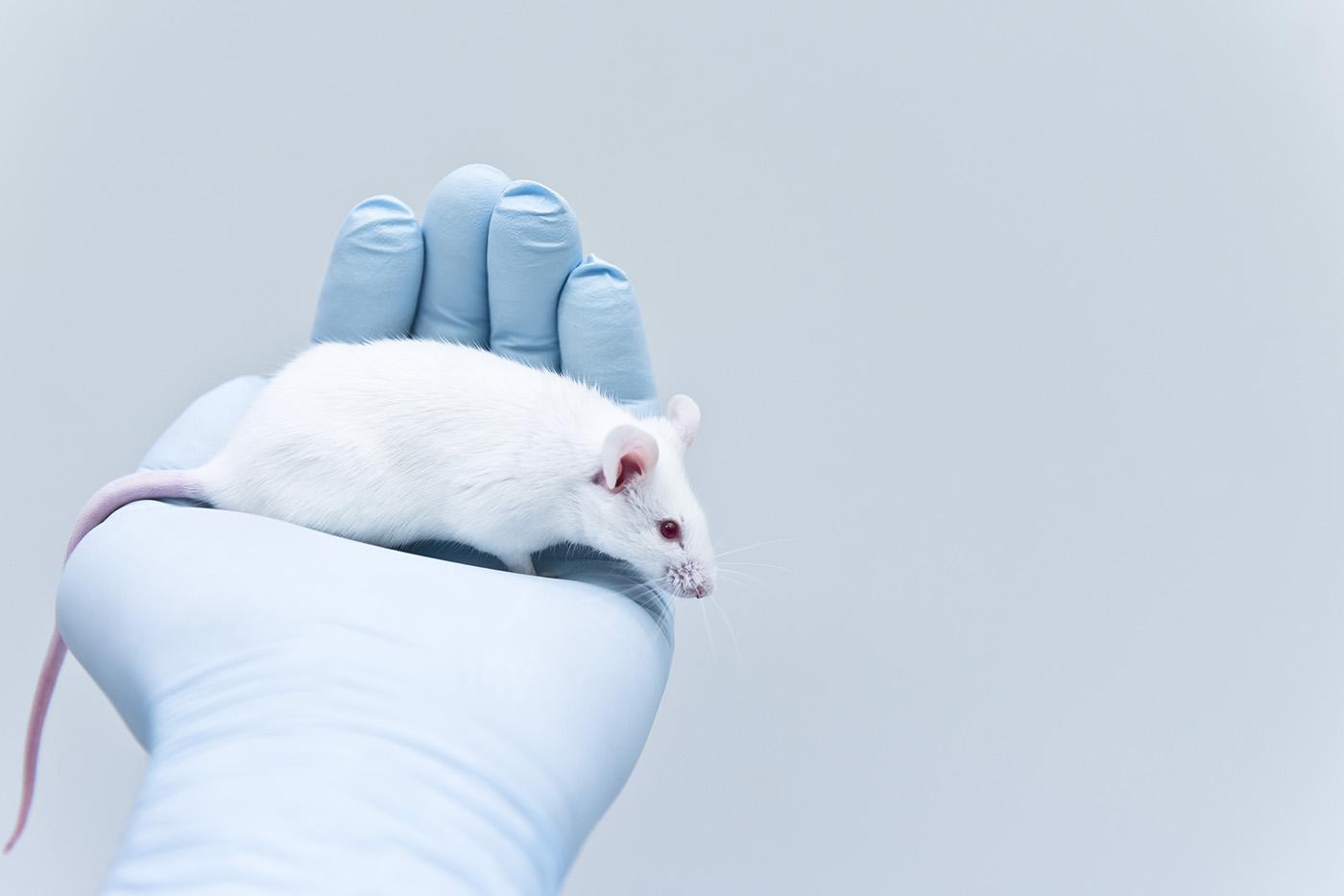 Мы все обязаны этим крысам...