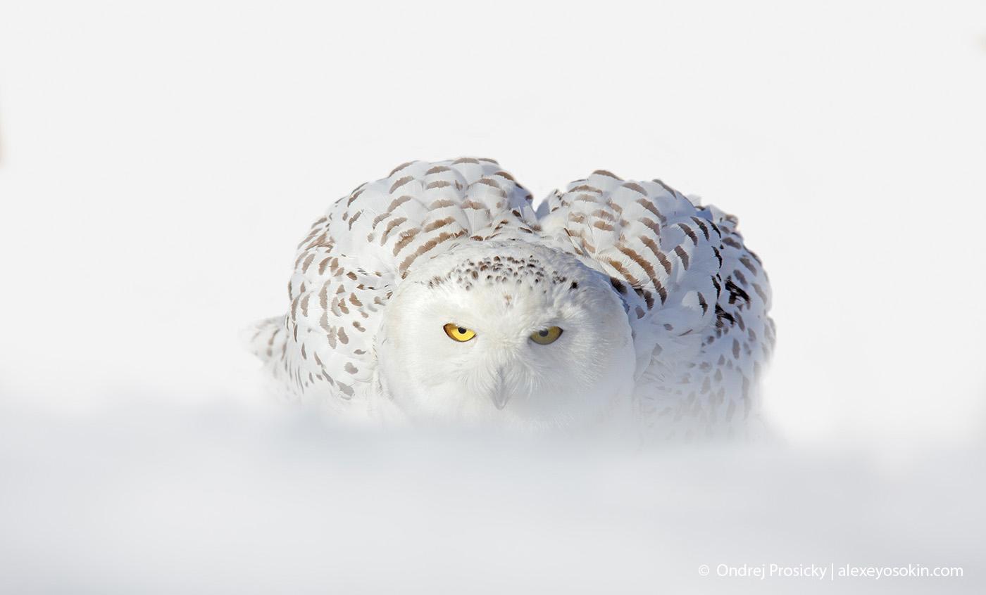 Созданы для снега. Пережившим московский снегопад посвящается.