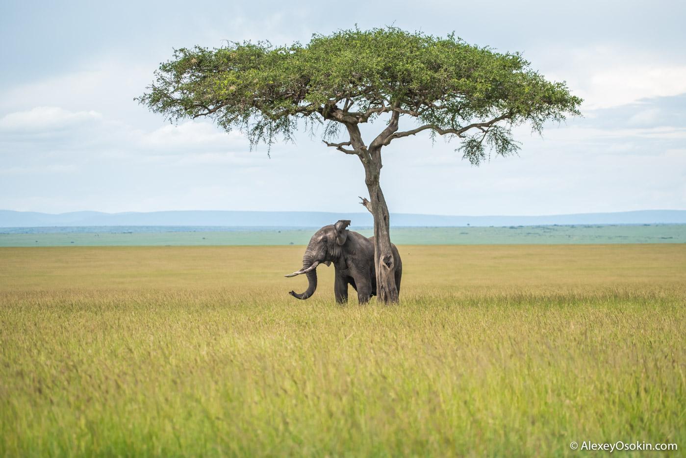 Слона не видели..?