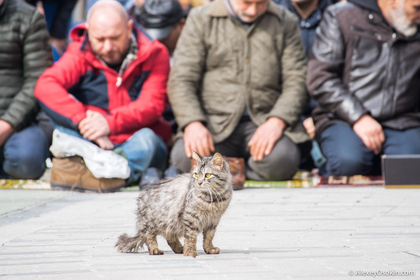 Город, где поклоняются кошкам