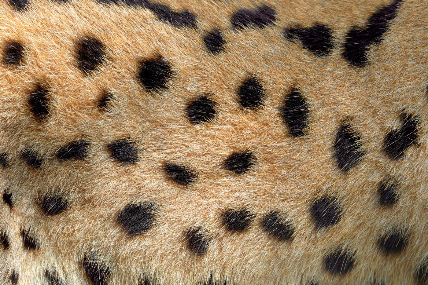 Тест на внимательность. Этап 1. Юный зоолог. будет, PENTAX, интересно, сверим, Подписывайтесь, открою, Фототехника, ВНИМАНИЕ, больше, природе, дикой, узнать, чтобы, обновления, шкуры, ответы, скидкой, принадлежат, животным, каким